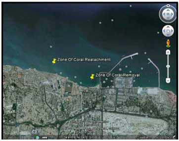 نمائی از محدوده برداشت مرجان و موقعیت آن نسبت به محدوده تثبیت مرجان - مهندسین مشاور هندسه پارس